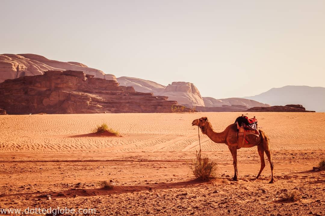 Desert camping in a Bedouin tent in Wadi Rum