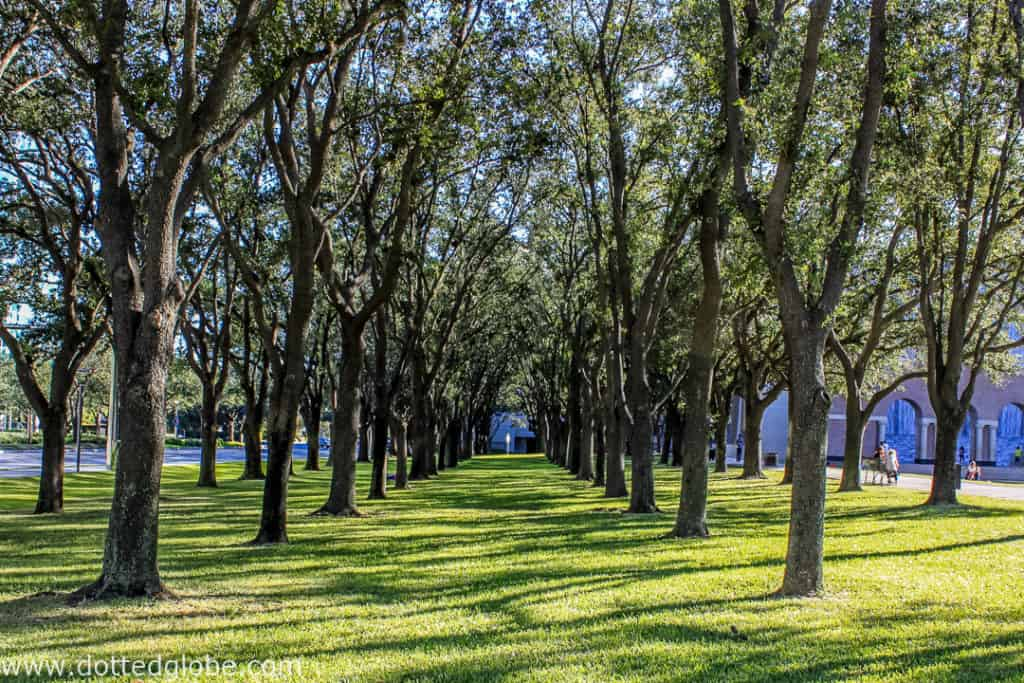 Gerald D. Hines Waterwall Park picture of live oak trees
