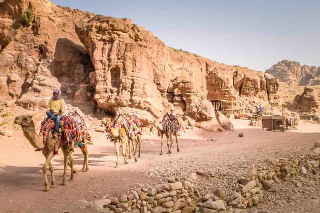 This is a photo of camels inside Petra taken by Ketki R S for Dotted Globe.