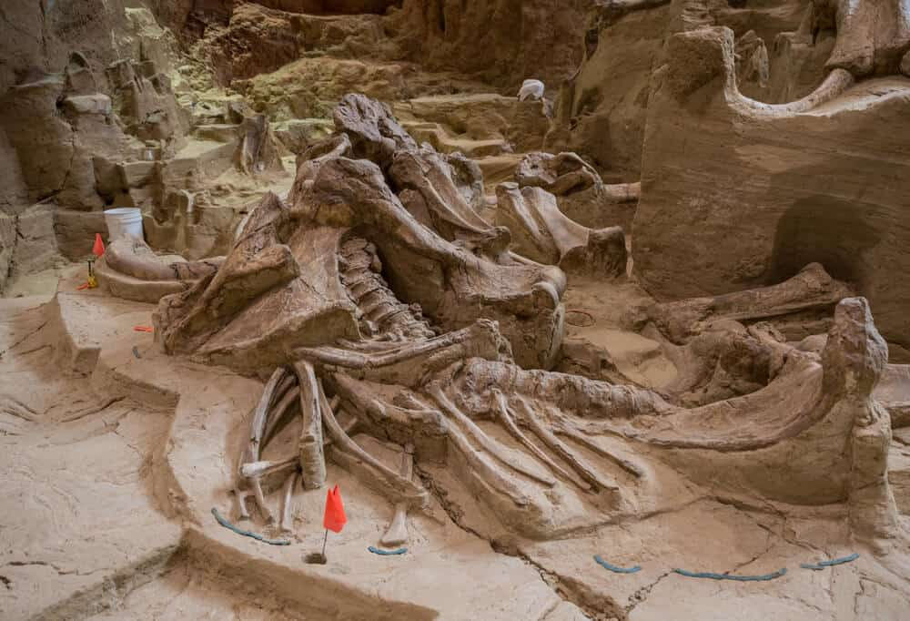 Fossilized skeletons at Mammoth Site in Hot Springs, South Dakota