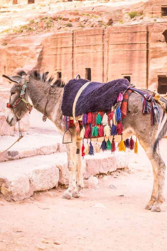 This is a photo of a donkey waiting to carry tourists up the High Place of Sacrifice Trail inside Petra. Taken by Ketki R S for Dotted Globe.
