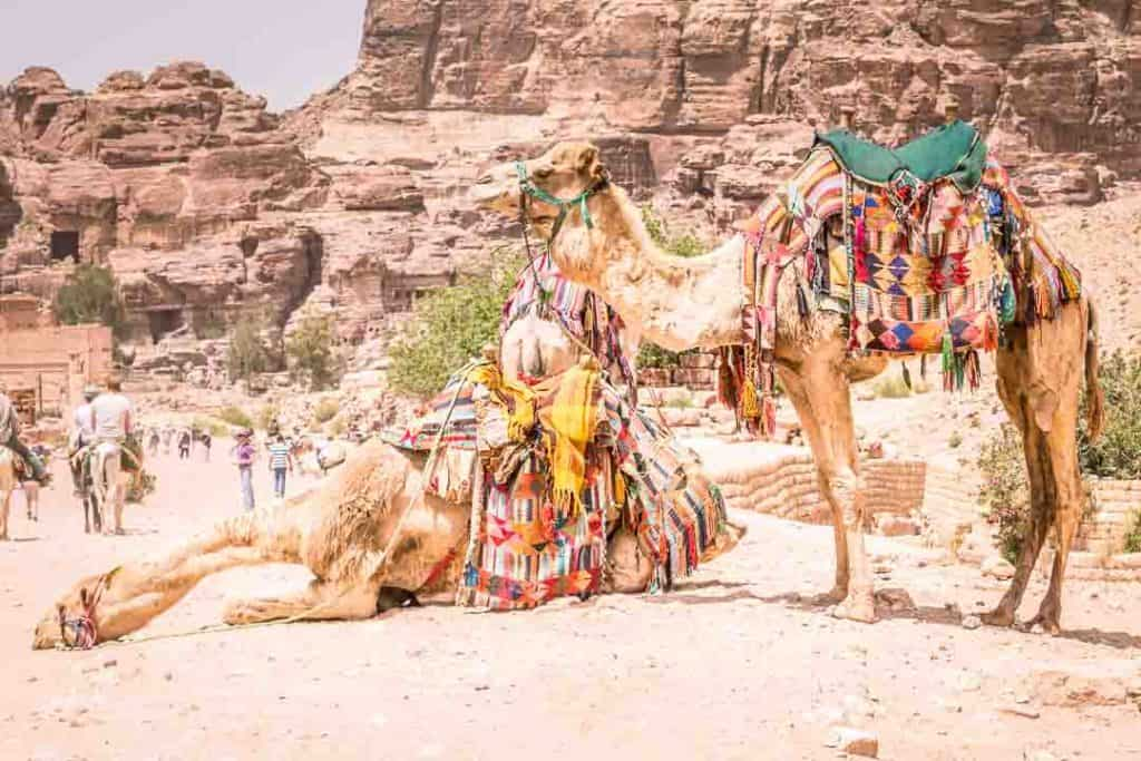 This is a photo od decorated camels taken inside Petra for travel blog Dotted Globe by Ketki R S.