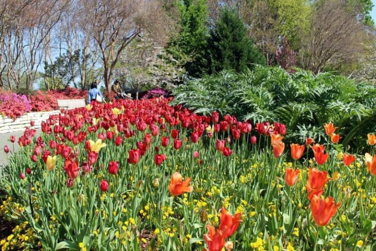 20 Best Destinations for experiencing stunning spring flowers in the US