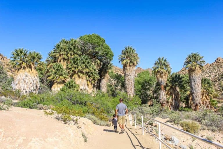 24 Best Things to do in Joshua Tree with kids