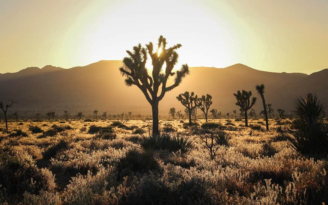 San Diego to Joshua Tree: 10 Best Places to add to Southern California road trip itinerary