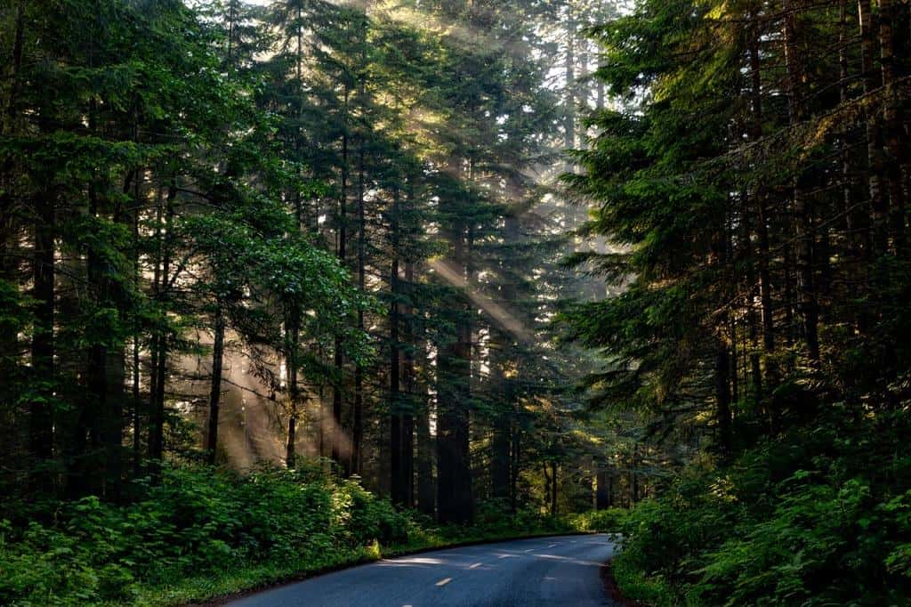 Redwoods National and State Park, California