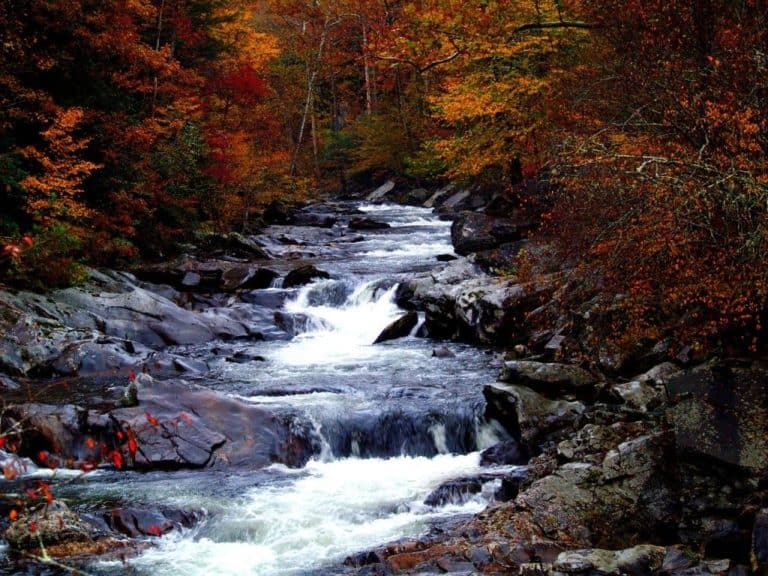 12 Best Things to do in Great Smoky Mountains National Park in the fall