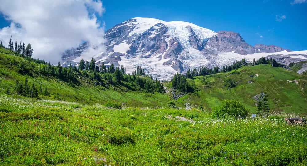 Mount Rainier National Park Wildflowers Meadow, Seattle, Washington