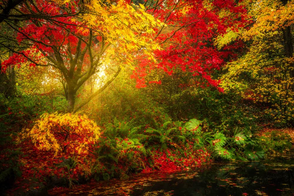 Seattle Japanese Garden & Washington Park Arboretum, Seattle, Washington
