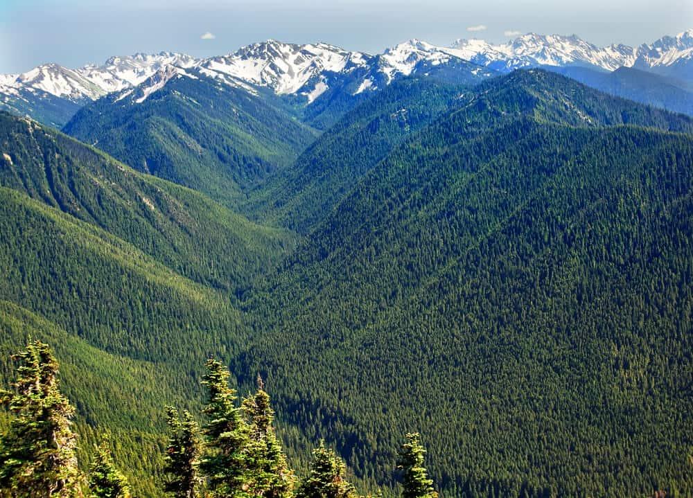 Hurricane Ridge Olympic National Park Washington