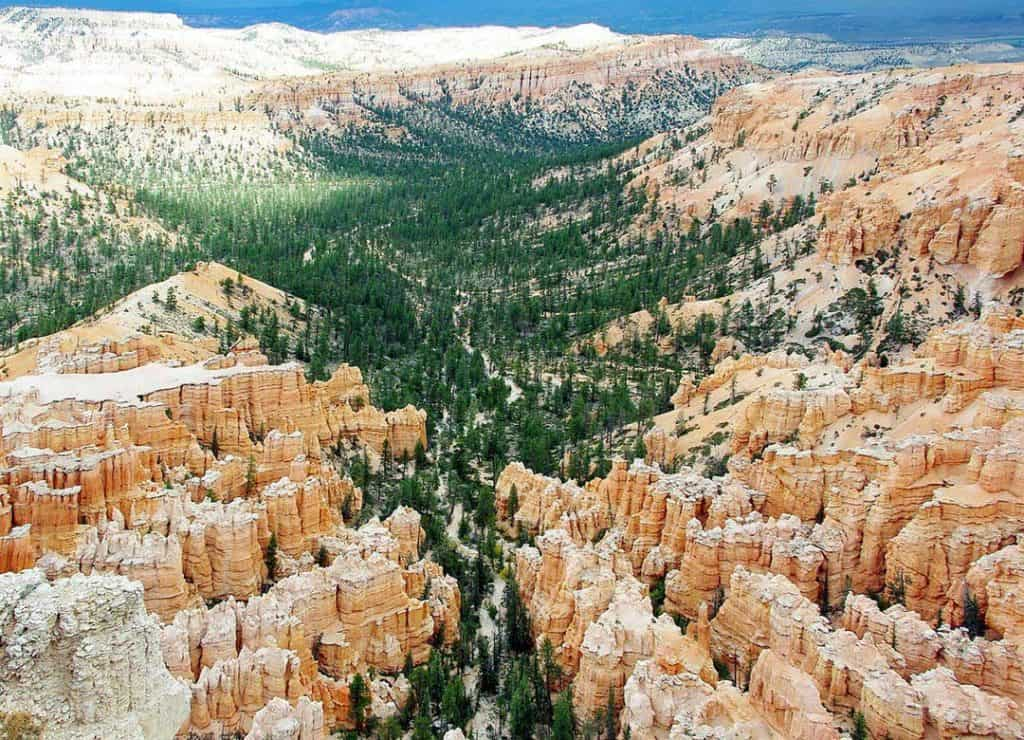 Ponderosa pine trees growing among the hoodoos at Bryce Canyon National Park