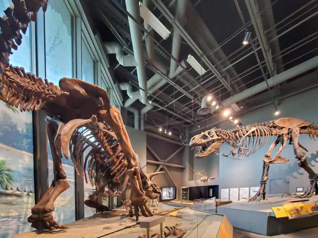 Dinosaur skeletons in Bismarck, North Dakota