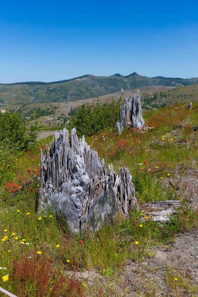 Beautiful vistas at Mt. St. Helens national volcanic monument