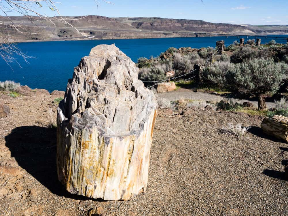Ginkgo Petrified Forest State Park in Washington state