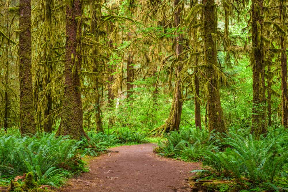 Hall of Mosses Olympic National Park