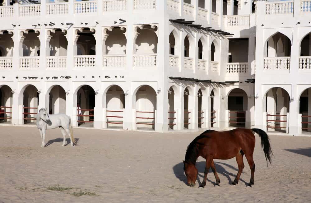 Arabian horses in Souq Waqif