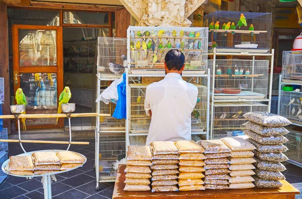 Pet store in Souq Waqif