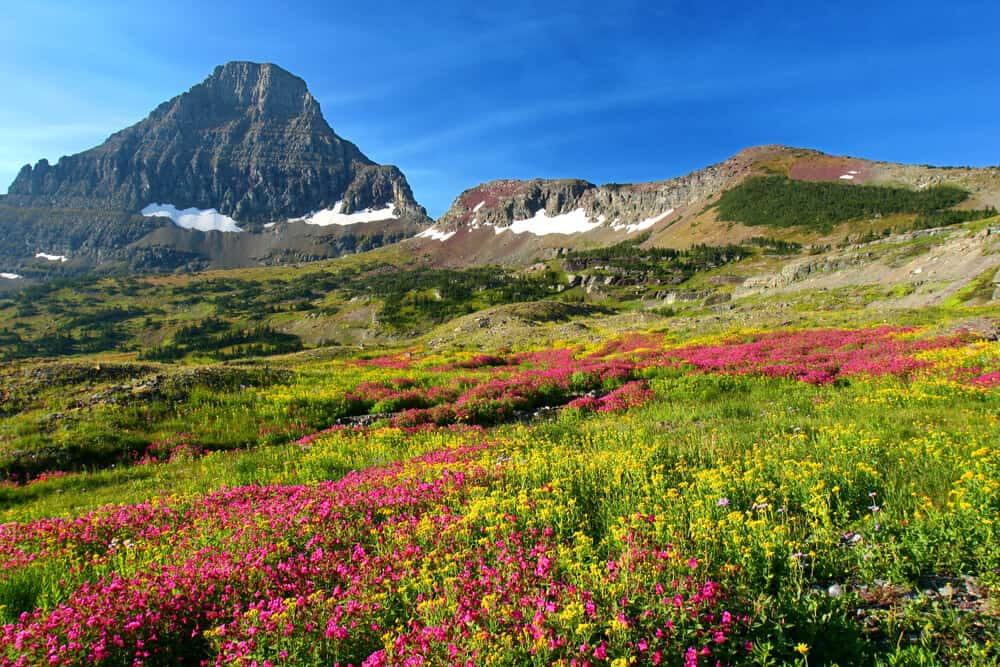 Alpine meadows Glacier National Park Montana