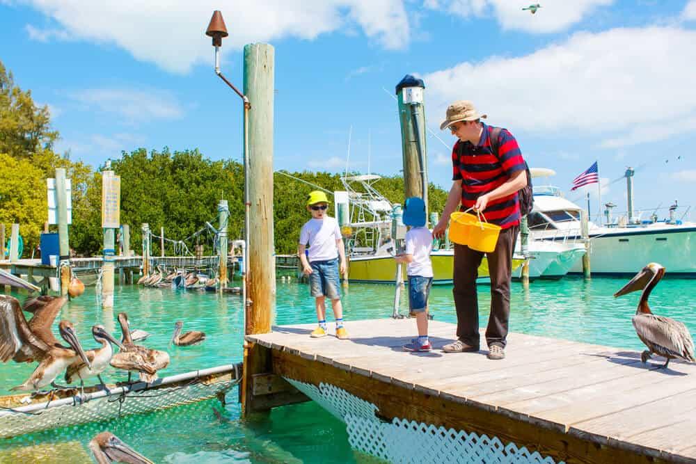 Feeding tarpons at Robbie's Marina Florida Keys