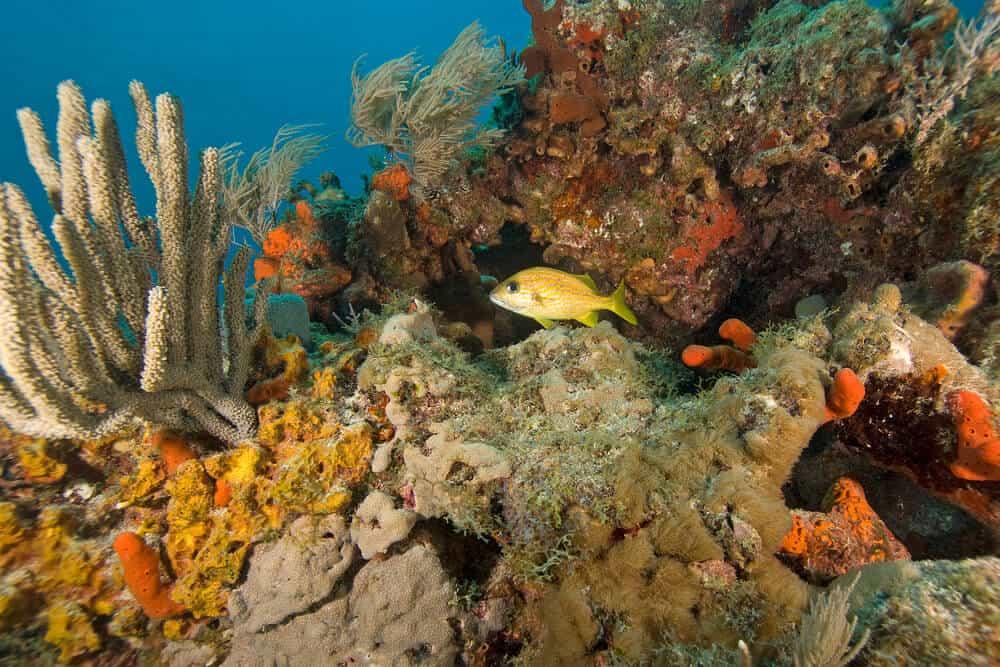 John Pennekamp Key Largo coral reef Florida