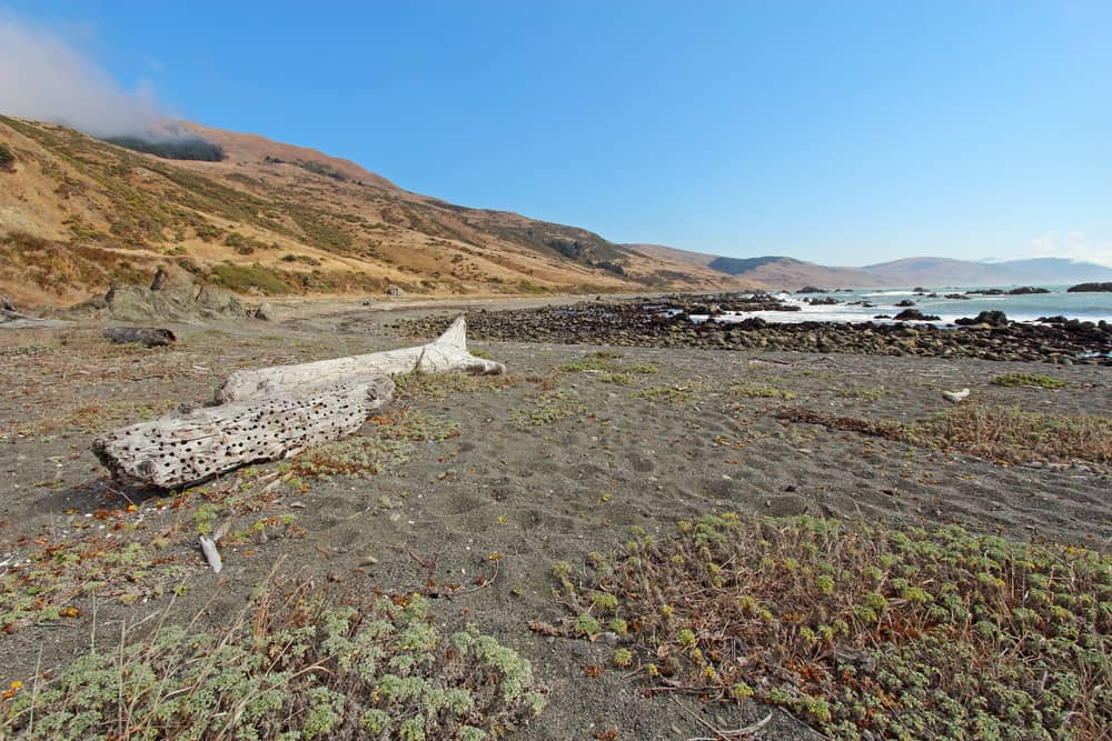 Pebble beach and driftwood on the Lost Coast of California