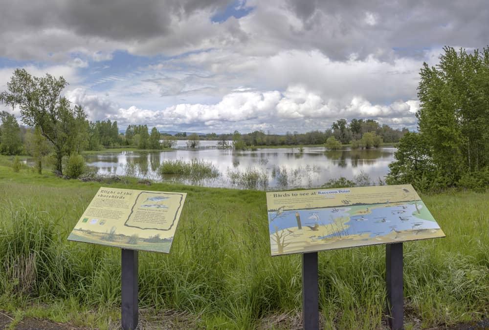 Sauvie Island bird sanctuary and wilderness Oregon.