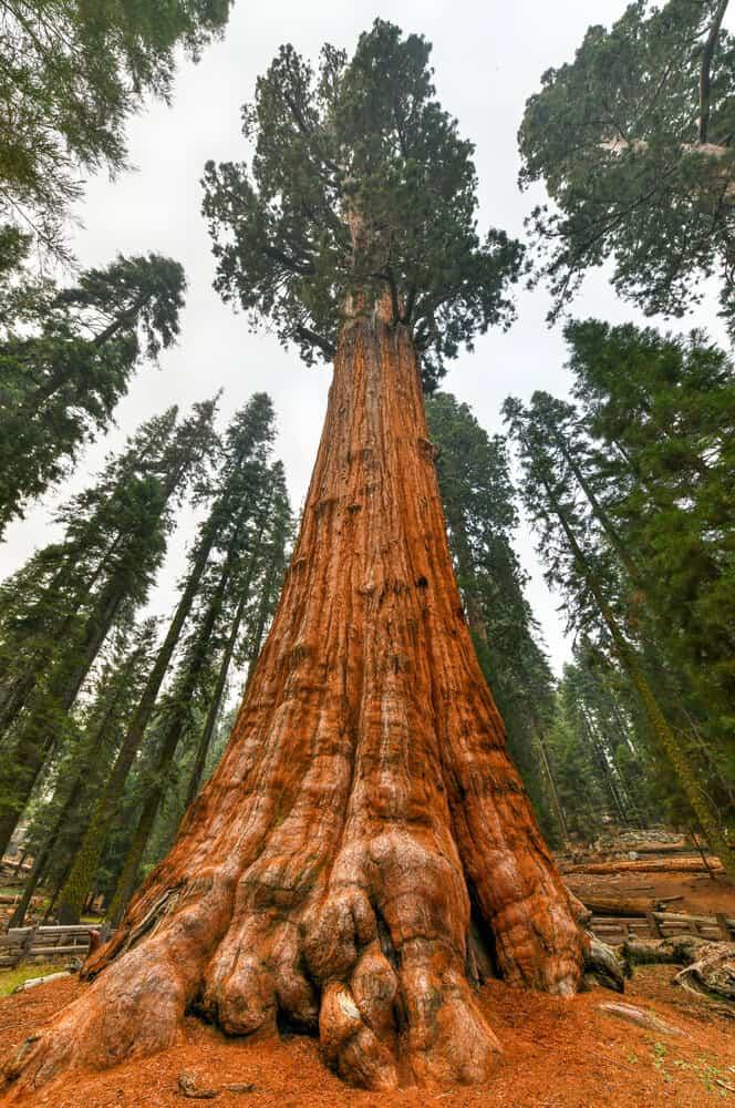 Sequoia National Park General Sherman Tree in California