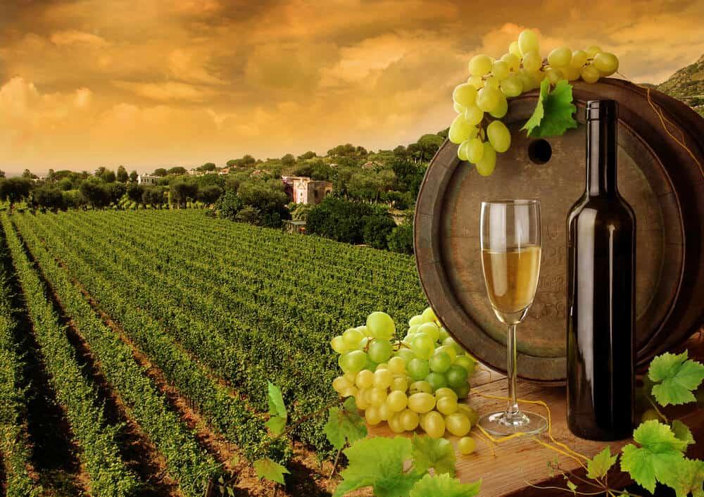 Willamette River wineries