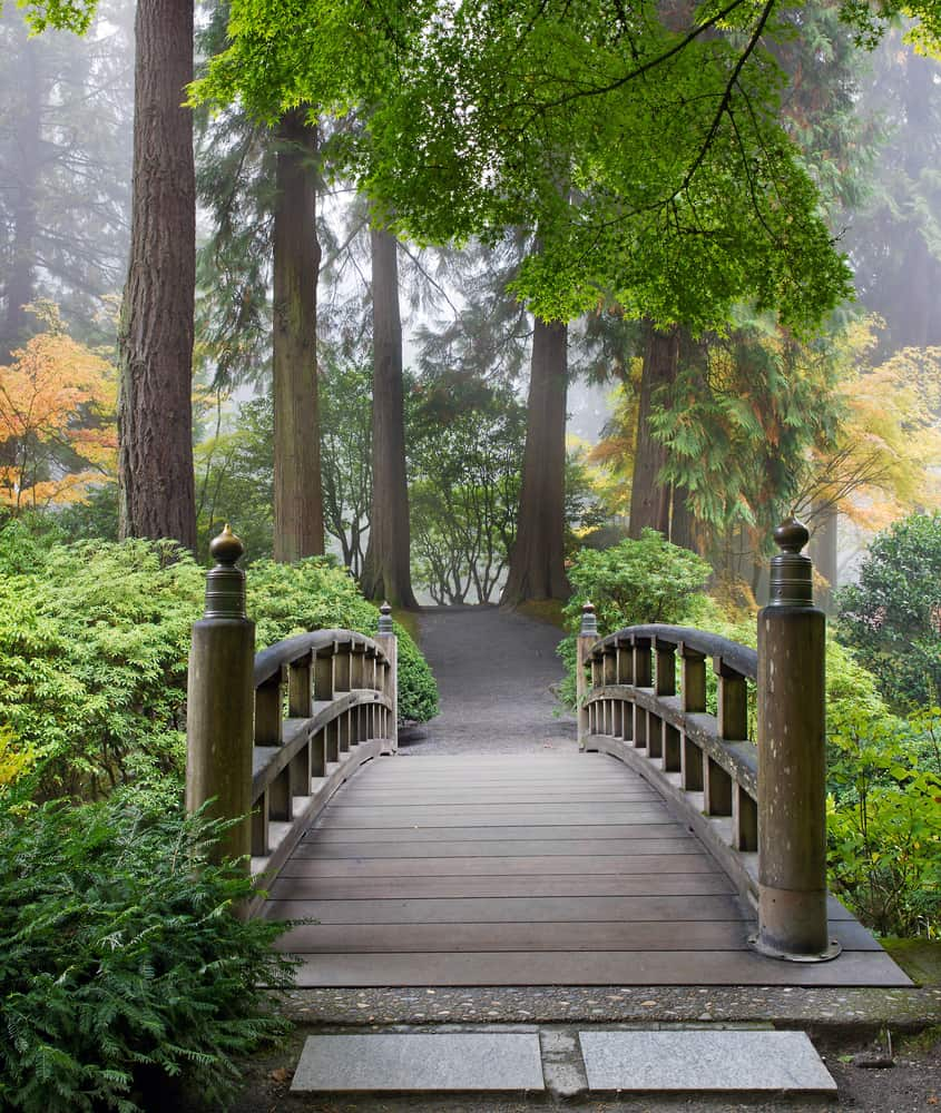 Foggy Morning by Wooden Foot Bridge at Portland Japanese Garden in Autumn