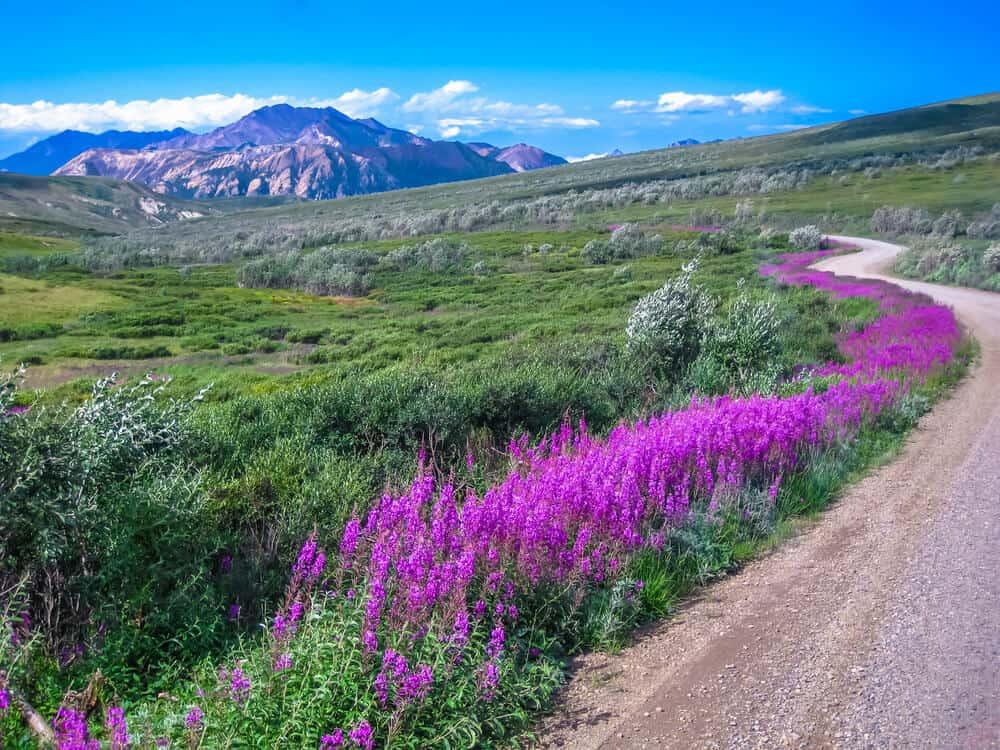 Denali National Park,Alaska in summer
