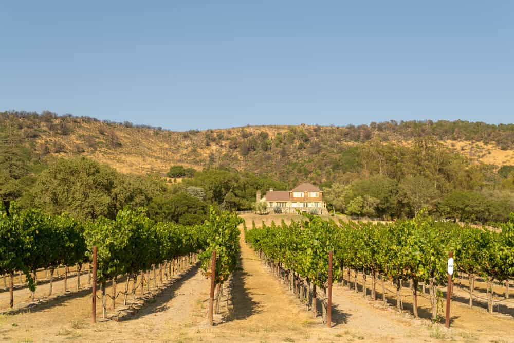 Vineyard and Winnery in Sonoma Valley