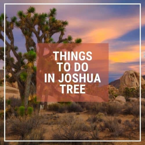 Dotted Globe USA Travel Blog Readers Fave Things to do Joshua Tree